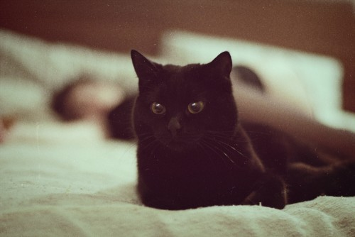 Cat4.jpg (201 KB)