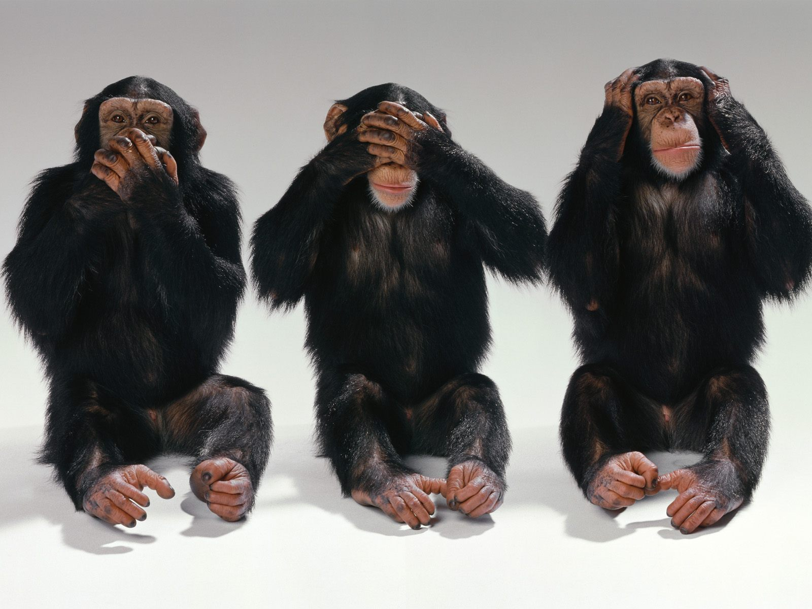 Hear No Evil, See No Evil, Speak No Evil.jpg