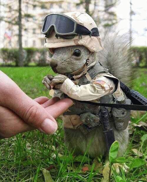 army-squirrel.jpg