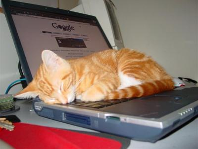 google.cat. Sleepy Google Cat