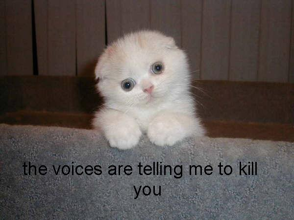 voicestokillyou The Voices In My Head Humor Cute As Hell Animals