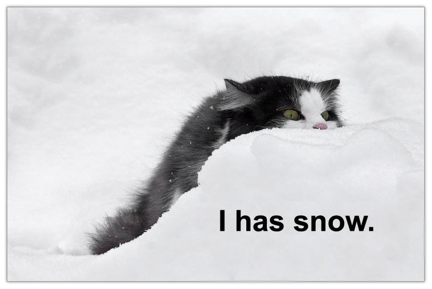 i-has-snow.jpg