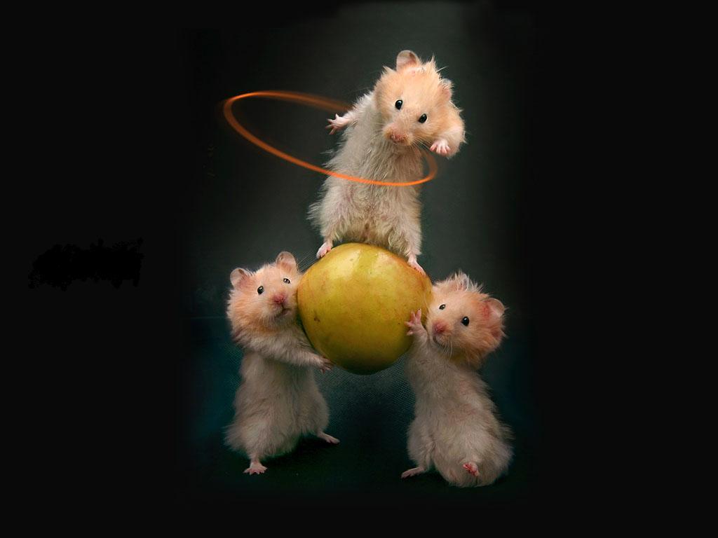 hamsters.jpg