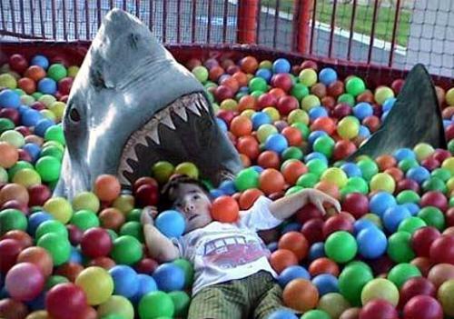 ball-shark.jpg