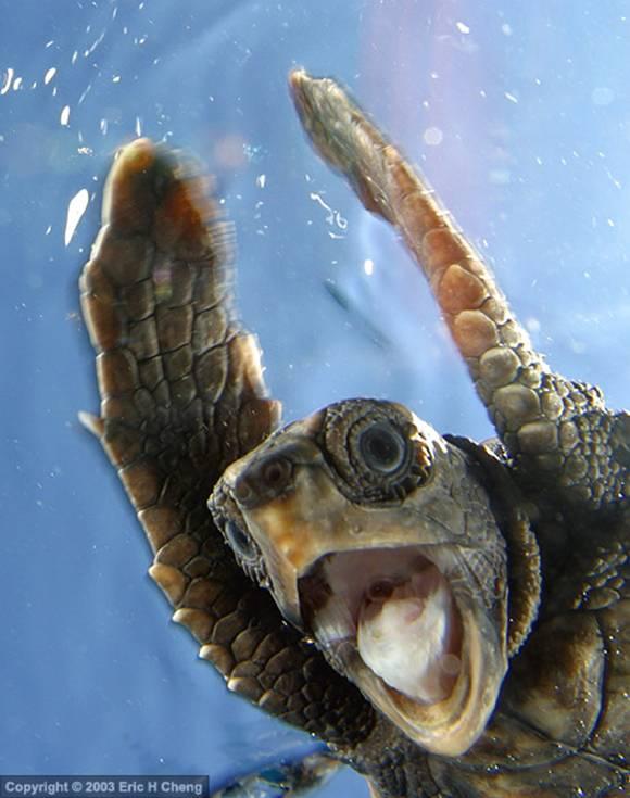 i-saw-a-turtle.jpg