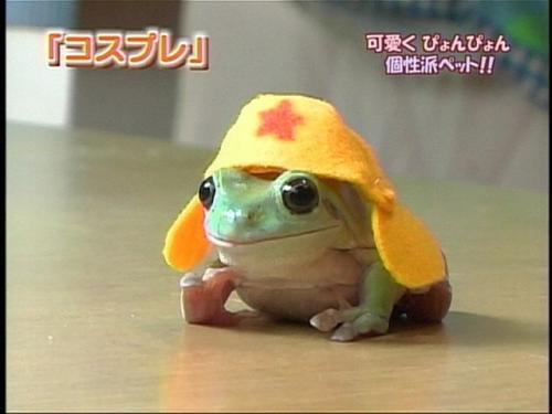 japanese-frog.jpg