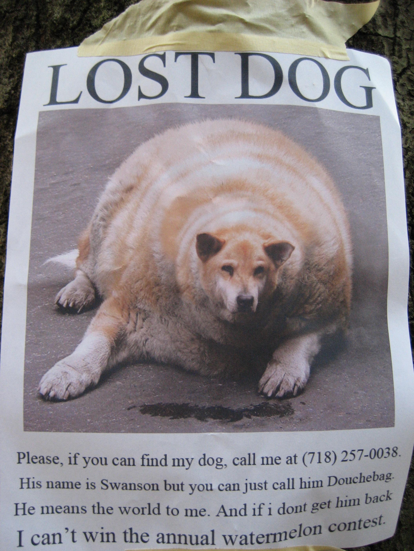lost-dog.jpg