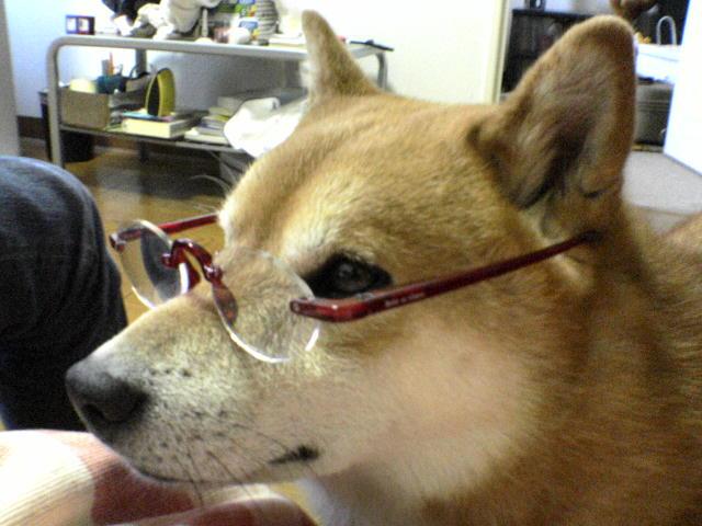 smartdog.jpg