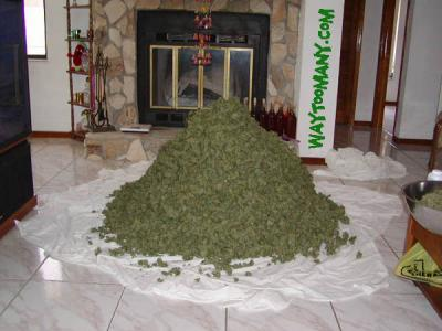 ton of weed.thumbnail Ton of Weed wtf