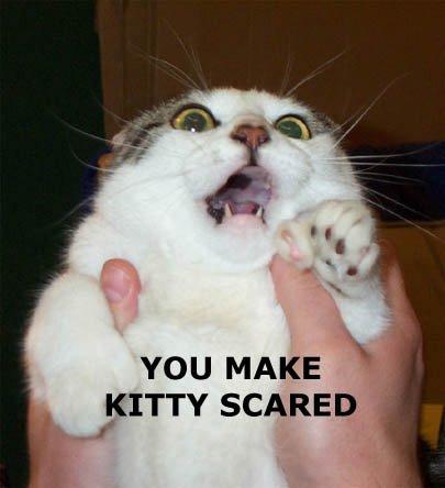 you_make_kitty_scared.jpg