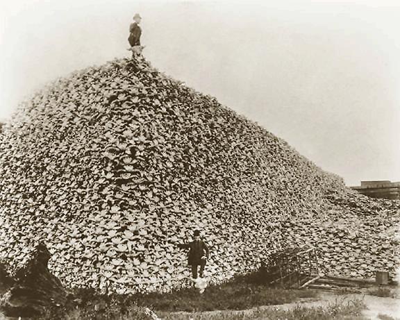 bison_skull_pile_ca1870.png