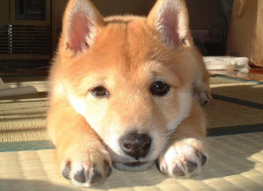 cute-puppy-doggy.jpg