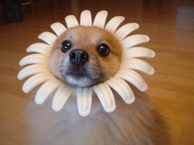 flower-pet.jpg