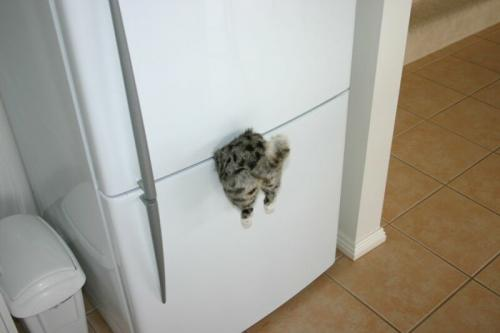 fridge magnet.thumbnail Kitty Fridge Magnet wtf Humor Forum Fodder