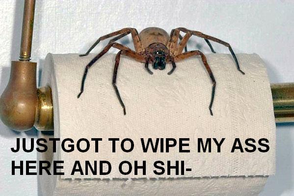 ass-spider.jpg