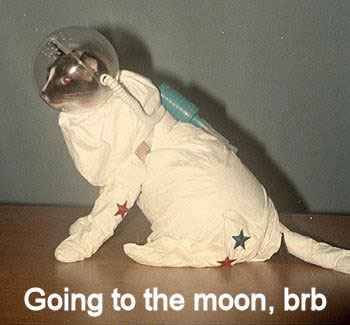 moon Going To The Moon, brb Space Forum Fodder Cute As Hell Animals