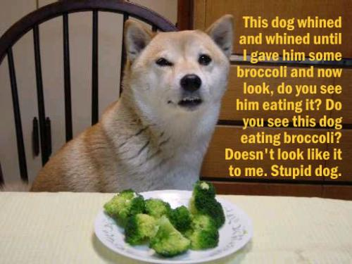 stupid dog.thumbnail Stupid Dog.  Do Not Want. wtf Humor Forum Fodder
