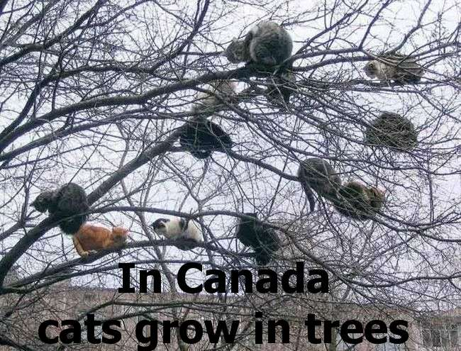 canada-cats.jpg
