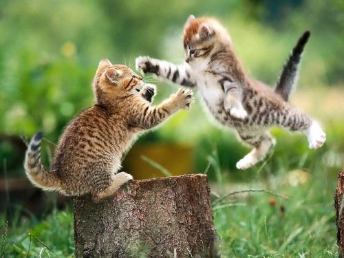 cat-vs-kitty.jpg