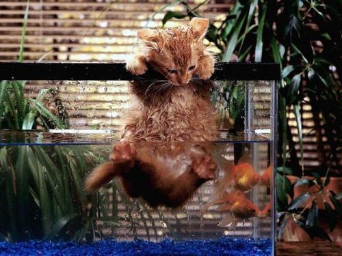 wet-cat.jpg