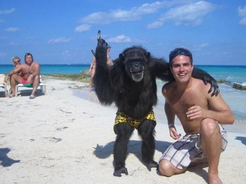 beach-monkey.jpg