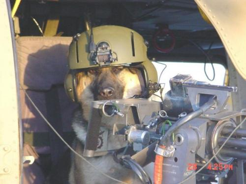 doggy-gunner-2.jpg