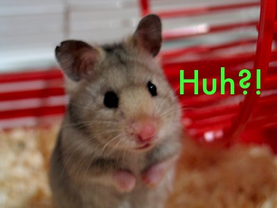 hamster huh Hampster Huh?! Forum Fodder Cute As Hell Animals