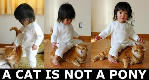 a cat is not a pony.thumbnail A Cat Is Not A Pony Humor Forum Fodder Cute As Hell Animals