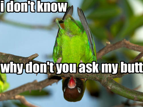 ask my butt I dont know, why dont you ask my butt Humor Forum Fodder Cute As Hell Animals