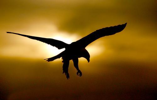 bird-sun.jpg