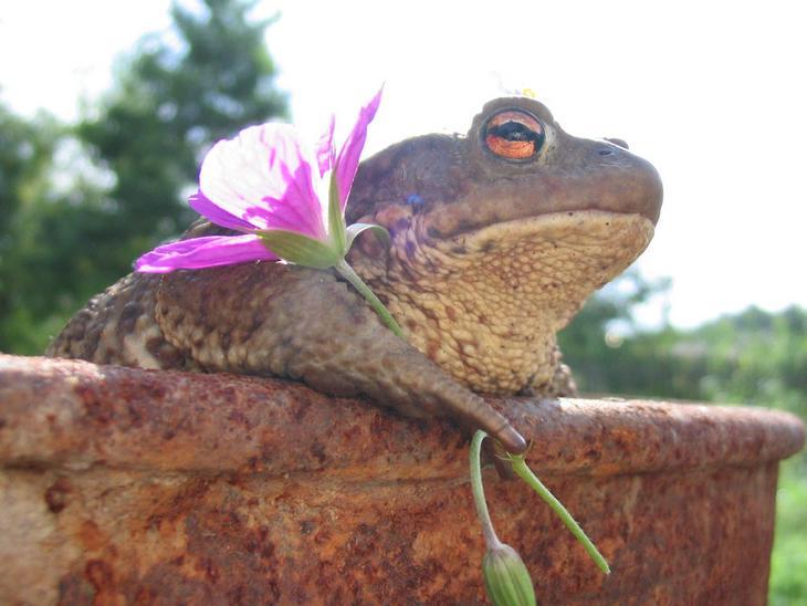 frog-and-flower.jpg