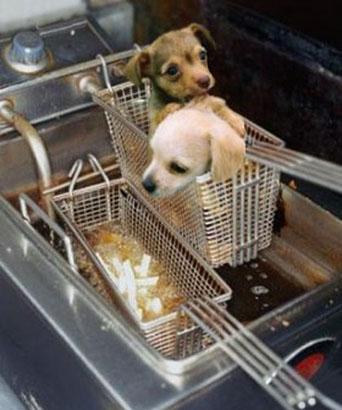 fry-the-puppy.jpg