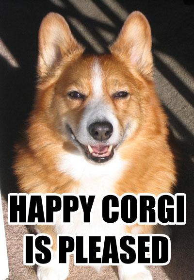 happy-corgi.jpg
