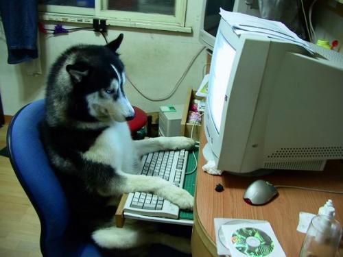 husky-comptuer.jpg