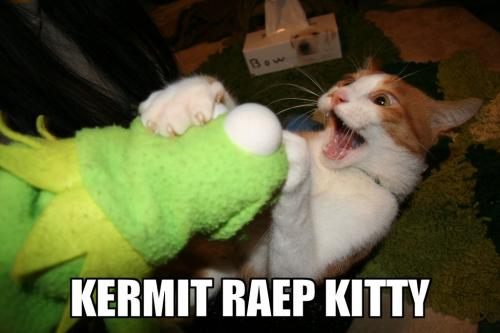 kermit-raep-kitty.jpg
