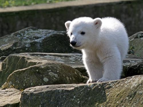 polar-bear-cuteness.jpg