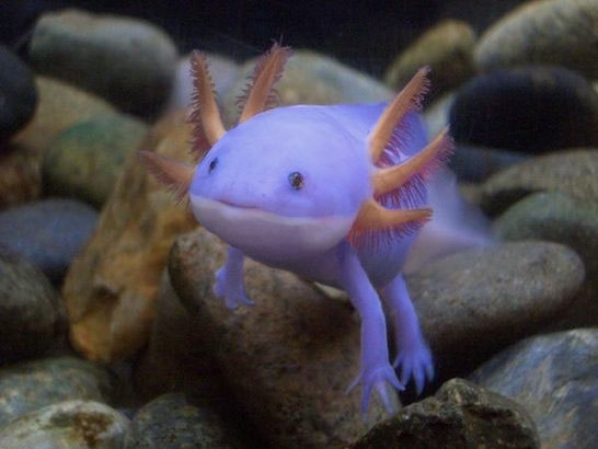 purple-creature.jpg