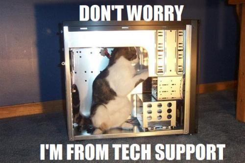 tech-support-cat11.jpg