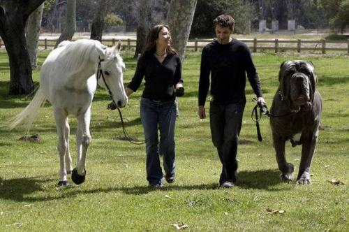 walk-your-dog-horse.jpg
