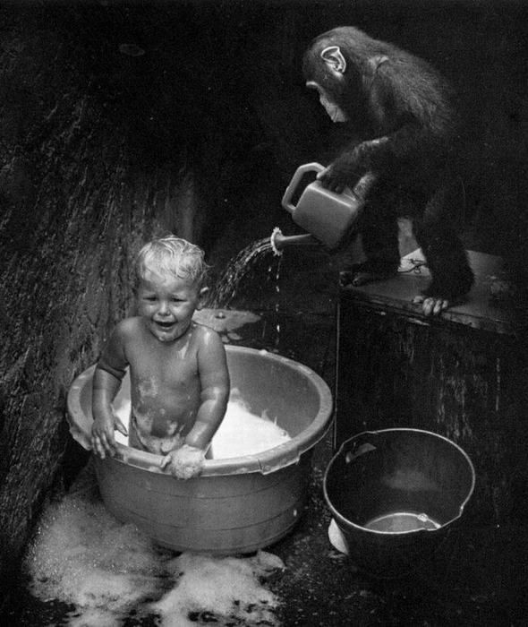 baby-bath-by-monkey.jpg