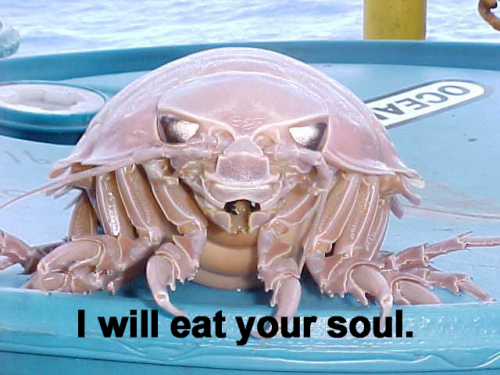 crab will eat your soul.thumbnail Devil Crab   I will eat your soul Nature Humor Forum Fodder