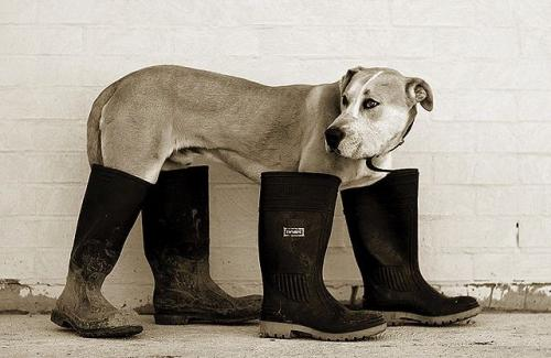 dog-in-boots.jpg