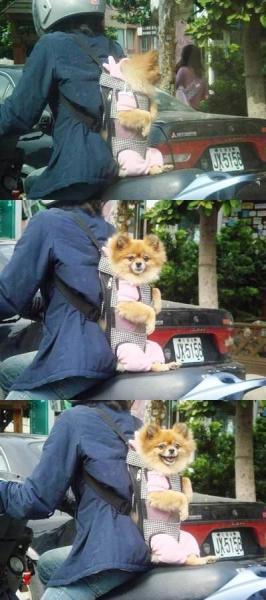 happy-backback-dog.jpg