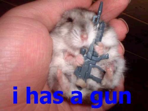 i-has-a-gun.jpeg