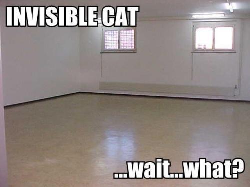 invisblecat1.thumbnail ...wait....what? wtf Humor