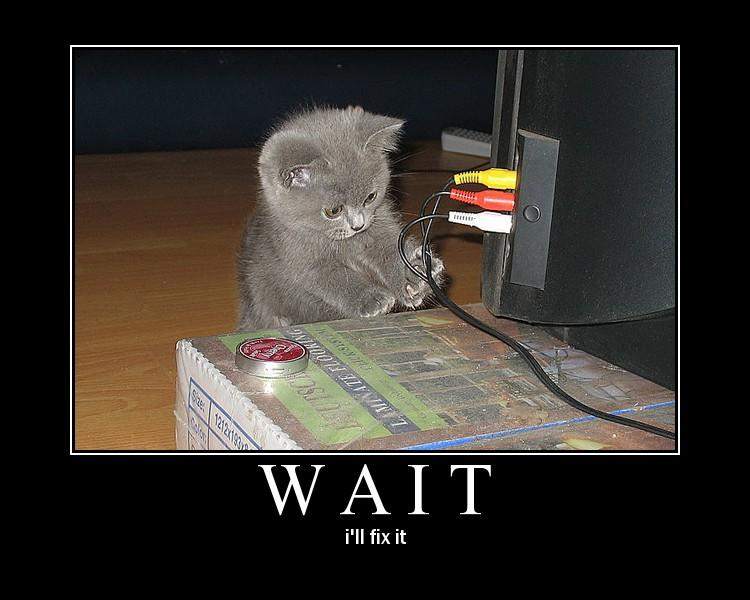 kitty-ill-fix-it.jpg