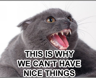kitty-this-is-why-we-cant-have-nice-things.jpg