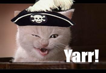 kitty-yarr.jpg