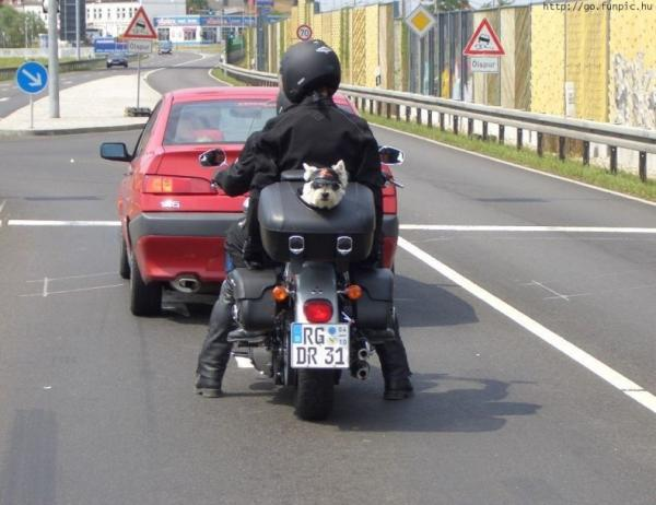 motorcycle-dog-box.jpg
