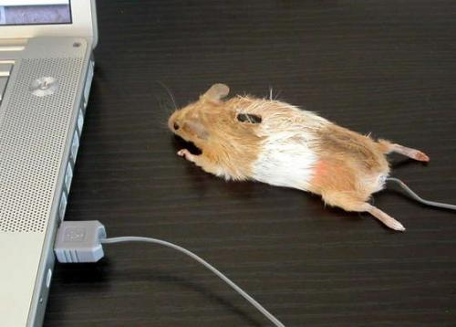 mouse mouse.thumbnail Mouse Mouse wtf Computers